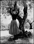 Audrey Hepburn (d)
